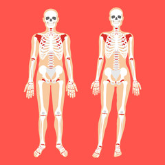 Human anatomy and skeletal system. Female and male bodies and skeletons. Modern concepts. Flat style design vector illustration