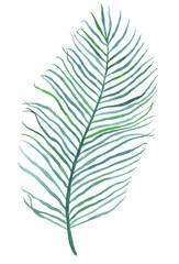 Watercolor palm leaf illustration
