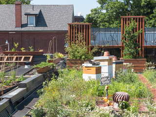 Green Roof with beehive