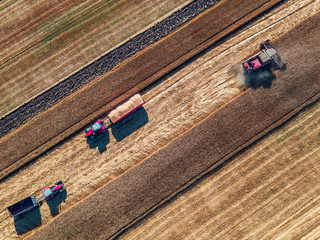 Wall Mural - Aerial view of combine on harvest field