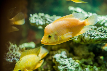 aquarium fish close up picture
