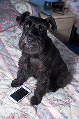 dog with mobile phone