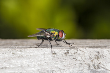 fly sitting on a piece of wood