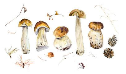 Many little mushrooms. Watercolor hand drawn illustration.