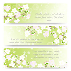 Wall Mural - Spring banners with blossoming tree brunch