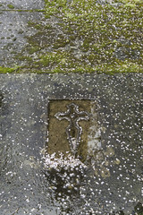 Tomb with mold and moss