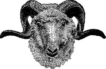 Vintage clipart goat