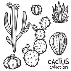 Cacti Hand Drawn Abstract Collection