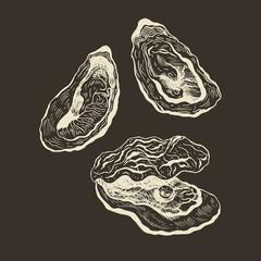 Oysters vintage vector set.