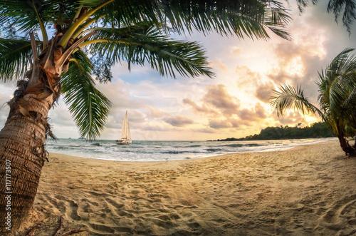 Wall mural Tropischer Strand bei Sonnenuntergang, ein Paradies mit Sand und Palmen