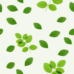 green leaves on white background (seamless pattern) for natural concept