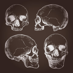 Drawing Of Human Skulls On Chalkboard