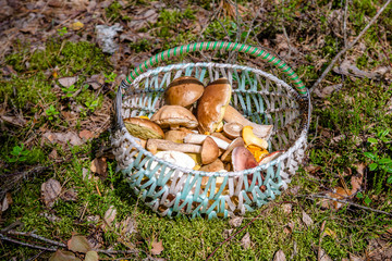 basket with mushrooms standing on forest clearing