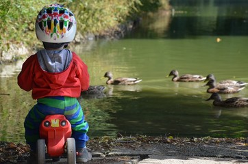 Little boy on a pushbike  watching the ducks by a pond