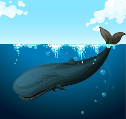 Whale swimming under the sea