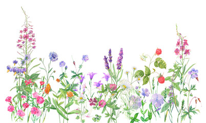 Panoramic view of wild meadow flowers and grass on white background, watercolor painting, realistic illustration