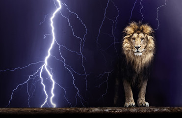 Portrait of a Beautiful lion, Lion and lightning