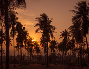 Toned image of a beautiful sunset on the background of silhouettes of palm trees