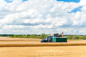 Combine cutting wheat on the field. Harvest time.