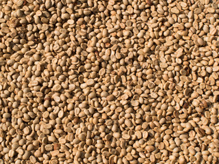 Not fried grains of raw coffee closeup