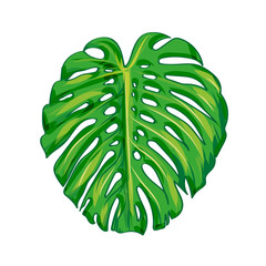 Tropical Leave monstera. isolate vector. Vector illustration Eps 10