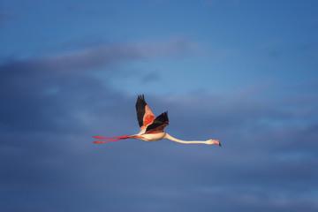 Foto op Aluminium Flamingo Pink flamingos in flight
