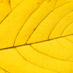 Abstract textured bright yellow leaf macro photo