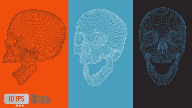 3D polygonal vector wireframe graphic skull in various view