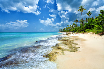 Tropical beach in Caribbean sea, Dominican Republic. Summer beach paradise. Island beach with blue sea water. Sea foam on beach.