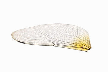 dragonfly transparent wing