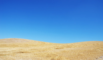 Printed roller blinds Beach landscape of straw field and blue sky