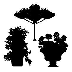 Silhouette of plants, flowers and floral arrangements