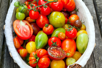 colorful tomatoes in basket