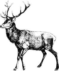 Vintage inage deer
