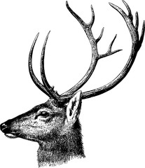 Vintage inage deer head
