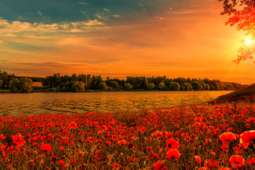 Printed kitchen splashbacks Lotus flower fantastic Poppy field at sunset. on the river. majestic pictures of nature