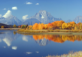 Reflection of yellow aspens at Oxbow Bend