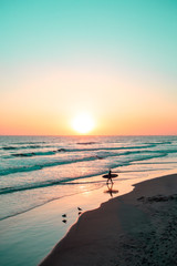 Person with surf board on beach at sunset