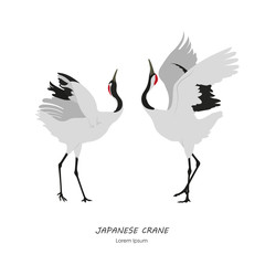 Two Japanese Cranes dancing on a white background