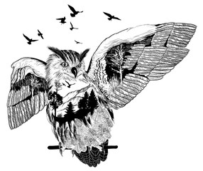 Hand drawn owl for your design, wildlife concept