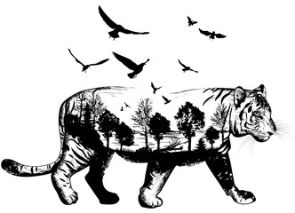 Hand drawn Tiger for your design, wildlife concept