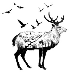Hand drawn Deer for your design, wildlife concept