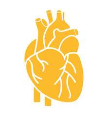 heart organ human isolated icon