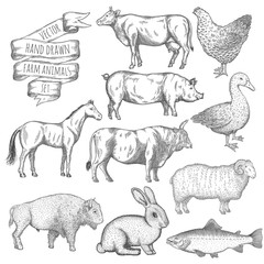 Farm animals set.