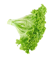 Fresh ripe lettuce with green leaves isolated on white