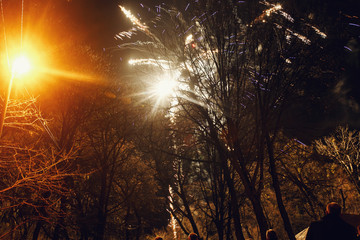 A look through the naked trees on white sparkling firework