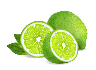 Hand-drawn illustration of lime. Digitally colored.