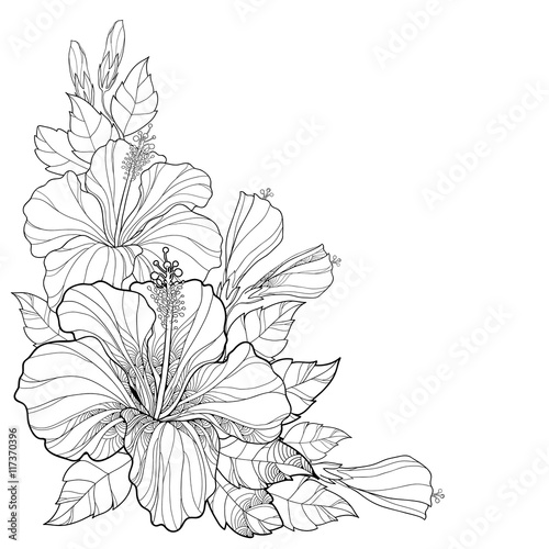 Line Art Flower Corner : Quot vector bouquet with chinese hibiscus or rosa