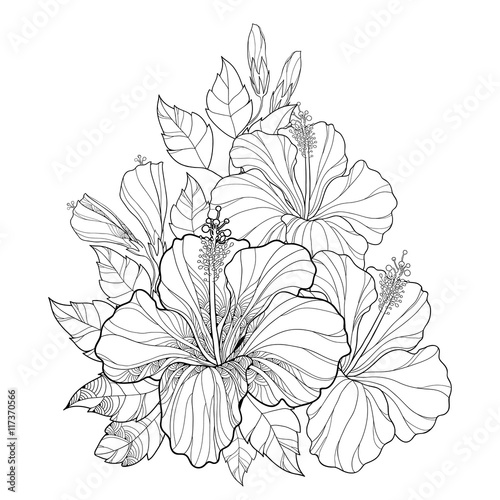 Contour Line Drawing Flowers : Quot vector bouquet with chinese hibiscus or rosa