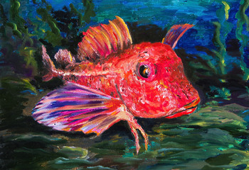The Red gurnard is a fish of tropical seas. Oil painting